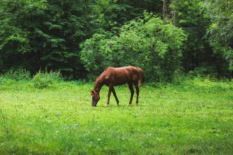 Atların Sağlığını Tehdit Eden Besinler