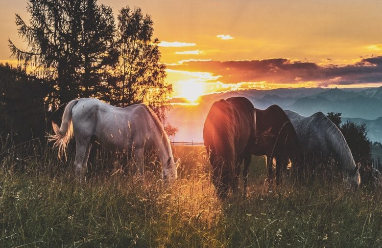 En Güzel At İsimleri