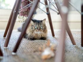 Kediler Evde Yalnız Kalabilir Mi?