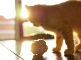 Sokağa Bırakılan Ev Kedisi Yaşamını Sürdürebilir Mi?