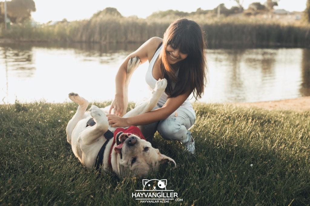 İlk Kez Köpek Besleyecekler İçin: Köpek Bakım Rehberi