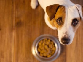 Köpeğim Yemek Yemiyor, Ne Yapılmalı?