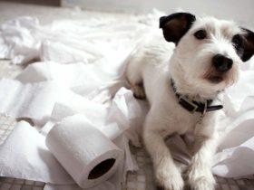 Köpeğe Balkonda Tuvalet Eğitimi Nasıl Verilir?