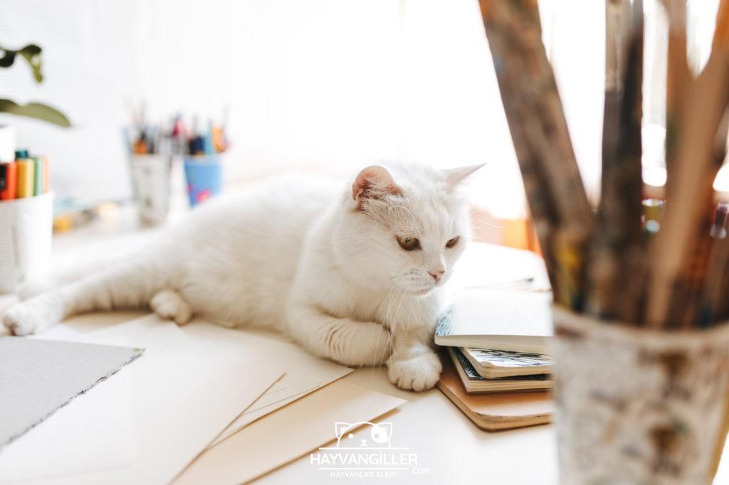 İlk Kez Kedi Besleyecekler İçin: Kedi Bakım Rehberi