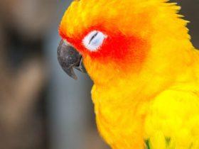 Kuşumun Gözü Kapandı Ne Yapmalıyım?