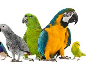 En Güzel Papağan İsimleri