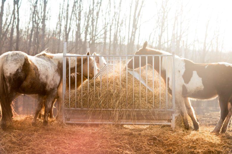 Atlar Ne Yerler, Nasıl Beslenirler?