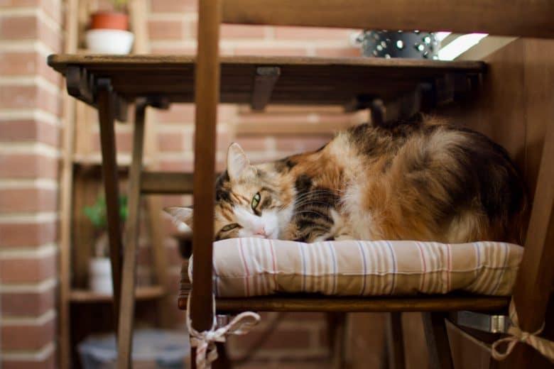 Kediler Kapalı Balkonda Üşür mü?