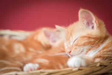 En Güzel Kedi İsimleri